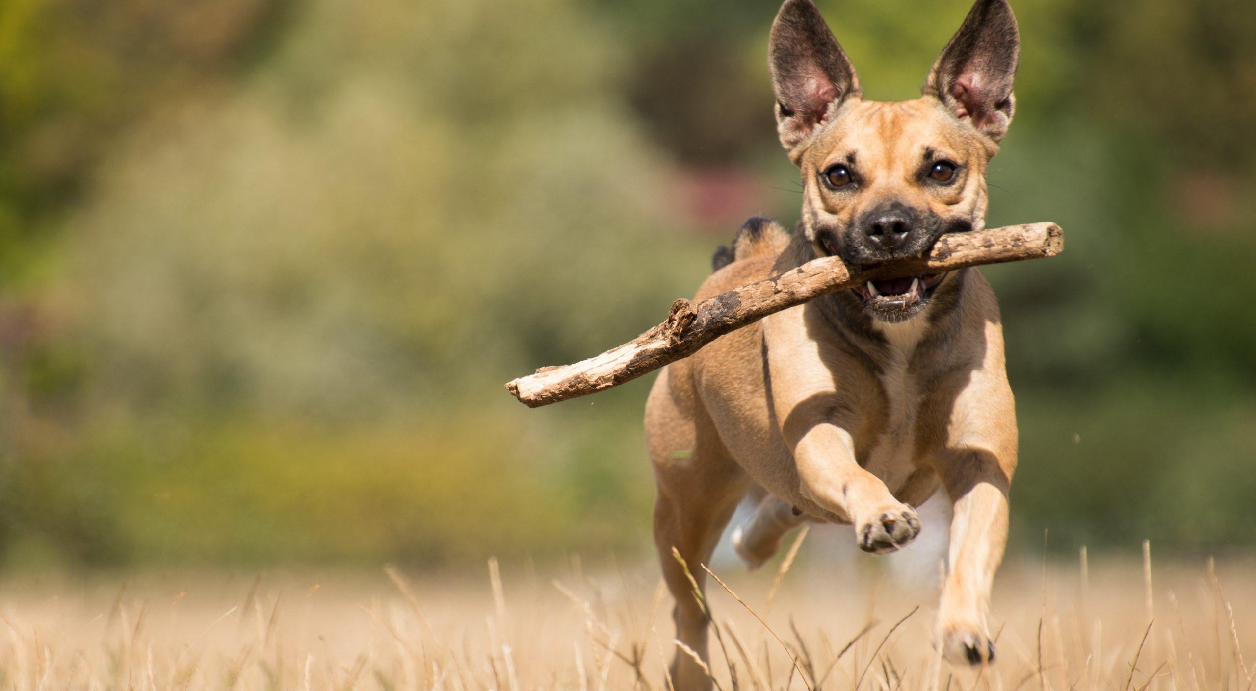 Bürgerinitiative und Stadtverwaltung laden ein, Hundefreilaufflächen mitzugestalten